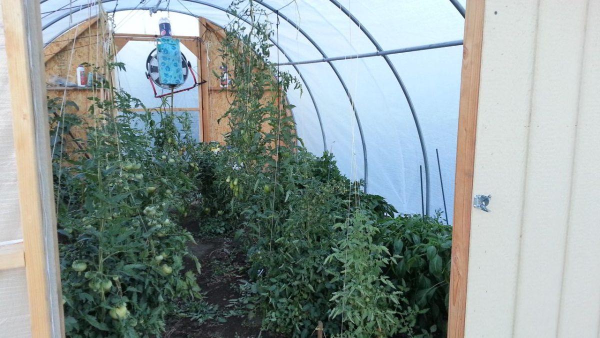 بهترین بخاری برای گلخانه